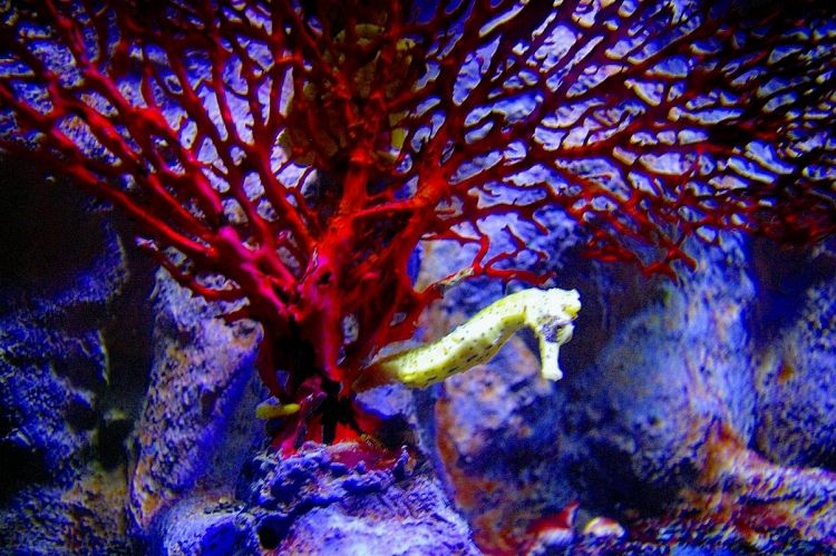 The New York Aquarium - Source: www.flickr.com/photos/radiate2357/